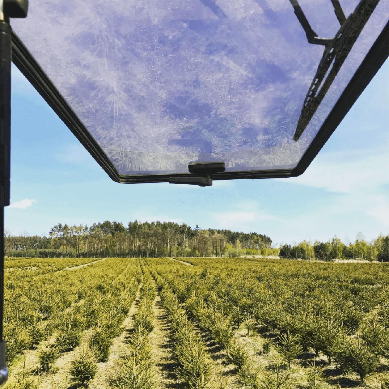 plantacja-choinek-z-okna-green-forest-czerwona-woda